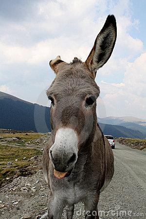 Hello Donkey!